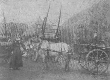 Mrs Bullerwell in the Farmyard, 1905